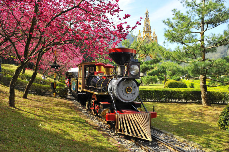 <p>The Formosan Aboriginal Culture Village is not only one of the most popular amusement parks in Taiwan, but is also home to many types of cherry blossom trees that bloom in spring. (圖 / 林碧貴-火車漫遊櫻花)</p>