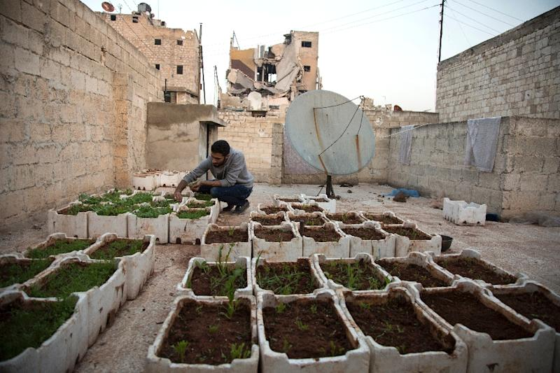 Syrian Amir Sendeh, 28 years old, tends to plants in his small rooftop garden, in the Kalasseh district of besieged eastern Aleppo, on October 31, 2016 (AFP Photo/Karam Al-Masri)