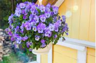 <p>Self-seeding, easy-to-grow pansies prefer cooler weather, namely in the late fall and early spring. The blooms have also gained attention for their exquisite face-like petals. </p><p><strong>Zones: 7 and above</strong></p>