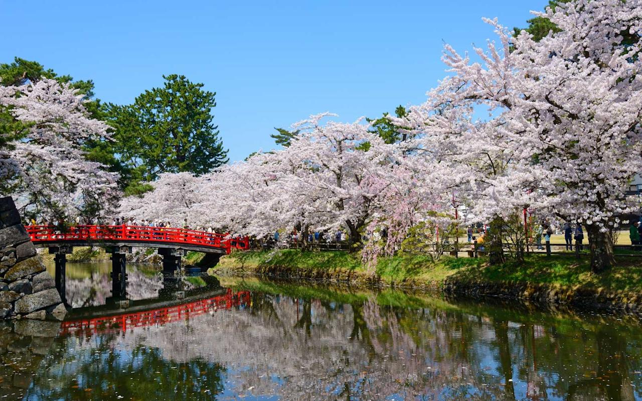 """<p>Located on the northern tip of Honshu Island, Aomori is among the best places in Japan for viewing cherry blossoms in late April through early May. <em>Travel + Leisure</em>'s <a href=""""https://www.travelandleisure.com/destination-of-the-year"""" target=""""_blank"""">2018 Destination of the Year</a>, Japan offers hot springs, mountain vistas, beautiful castles, and spectacular cherry trees in full bloom each year. In Aomori Prefecture, the <a href=""""https://www.en-aomori.com/culture-034.html"""" target=""""_blank"""">Hirosaki Sakura-Matsuri Cherry Blossom Festival</a> attracts visitors who enjoy the colorful blooms from boats, under tunnels of trees, or illuminated at night. The nearly 3,000 trees are pruned in a unique way that produces lush flowers whose weight causes the trees' branches to bend gracefully. The area also includes the Sannai-Maruyama Ruins, an archaeological discovery of structures and artifacts dating back 5,500 years and the <a href=""""http://www.aomori-museum.jp/ja/"""" target=""""_blank"""">Aomori Museum of Art</a> which features contemporary Japanese works as well as traditional international art. The Nebuta Museum focuses on Aomori's August Nebuta festivals, with displays of colorful floats, parade videos, and bright paintings, the next best thing to actually being at the event. For local culture, relaxation, authentic Japanese dining, and apple-scented baths fed by the Owani Hot Spring, visit <a href=""""https://kai-ryokan.jp/tsugaru/"""" target=""""_blank"""">Hoshino Resorts KAI Tsugaru</a>, a hot spring ryokan, located 50 minutes by train from Aomori Airport.</p> <p><em><a href=""""https://www.travelandleisure.com/trip-ideas/new-world-wonders-black-tomato-japan-itinerary"""">Book a trip to Japan with our luxury travel partner Black Tomato.</a></em></p>"""