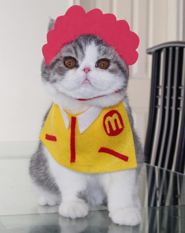 <p>Ronald McCat. Snoopy, a 2-year-old exotic shorthair, wears a McDonalds outfit made by his human owner, Shirley Cheung. (Photo: DailySnoopy/Caters News) </p>