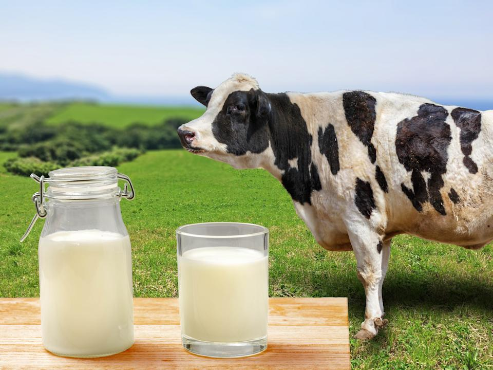 Regular cow's milk provides an array of healthy vitamins and nutrients, such as vitamin D, calcium, potassium, niacin and protein. It also contains saturated fat. It is beneficial for healthy bones, dental health, reducing obesity in children, protection from thyroid diseases, and cardiovascular health.