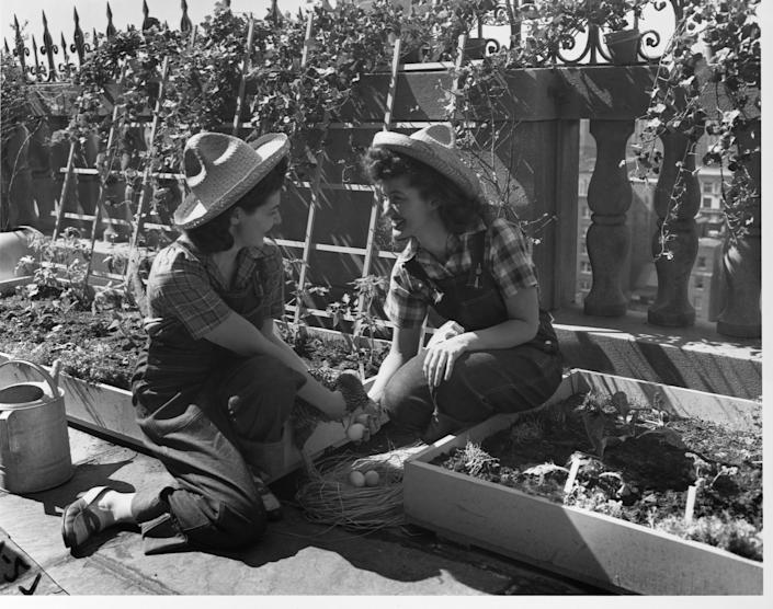 Two women from Mount Holyoke College in Massachusetts tend a World War II victory garden. (Photo: Bettmann via Getty Images)