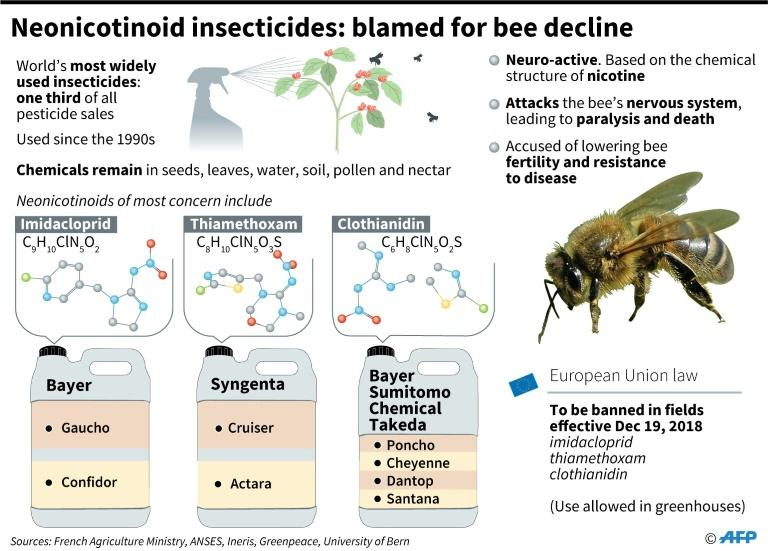Neonicotionoid insecticides: blamed for bee decline