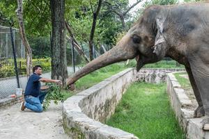 Mission Leader Dr. Amir Khalil feeds Kaavan the elephant, slowly approaching him to gain the elephant's trust.  Copyright: © FOUR PAWS