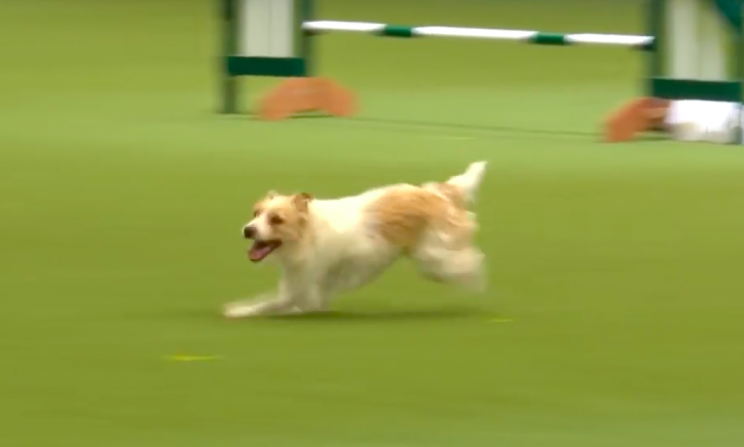 The rescue dog is just as adorable away from Crufts as he was at it (Grab)