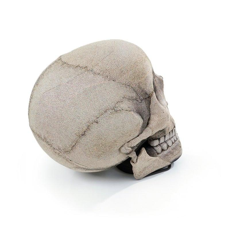 """<p>The <a href=""""https://www.popsugar.com/buy/Skull-Chair-489743?p_name=Skull%20Chair&retailer=etsy.com&pid=489743&price=449&evar1=casa%3Aus&evar9=46602071&evar98=https%3A%2F%2Fwww.popsugar.com%2Fhome%2Fphoto-gallery%2F46602071%2Fimage%2F46602075%2FSkull-Chair&list1=halloween%2Cchairs%2Challoween%20decor&prop13=mobile&pdata=1"""" rel=""""nofollow"""" data-shoppable-link=""""1"""" target=""""_blank"""" class=""""ga-track"""" data-ga-category=""""Related"""" data-ga-label=""""http://www.etsy.com/listing/199097548/skull-chair-free-shipping-world-wide?ref=popsugar.com"""" data-ga-action=""""In-Line Links"""">Skull Chair</a> ($449) is a perfect investment piece for your apartment.</p>"""