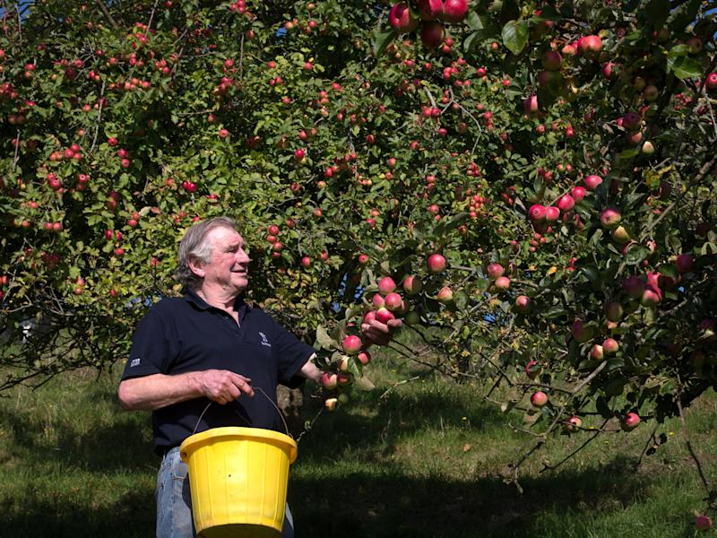 An apple orchard in Minnesota is under fire after ranting about 'the China Virus' (Getty Images)