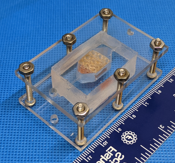 This is a chunk of functional human liver that was 3D printed out of progenitor cells. It survived and functioned for 30 days.