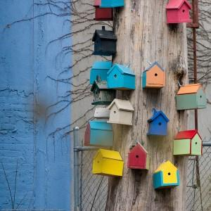 Many birdhouses on the same tree