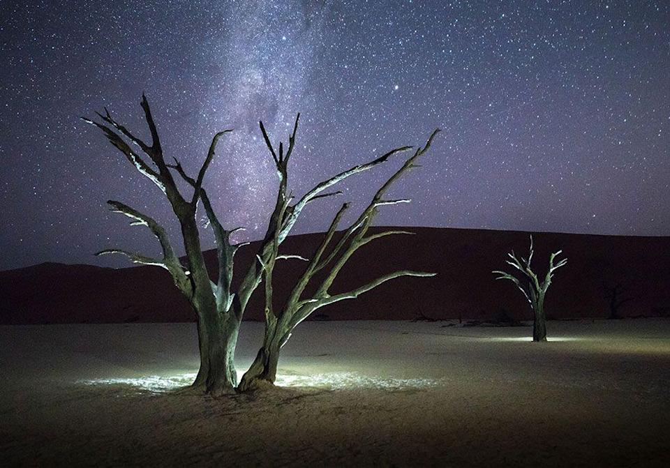 <p>900-year-old trees glow under the night sky in Sossusvlei, Namibia // September 2016</p>