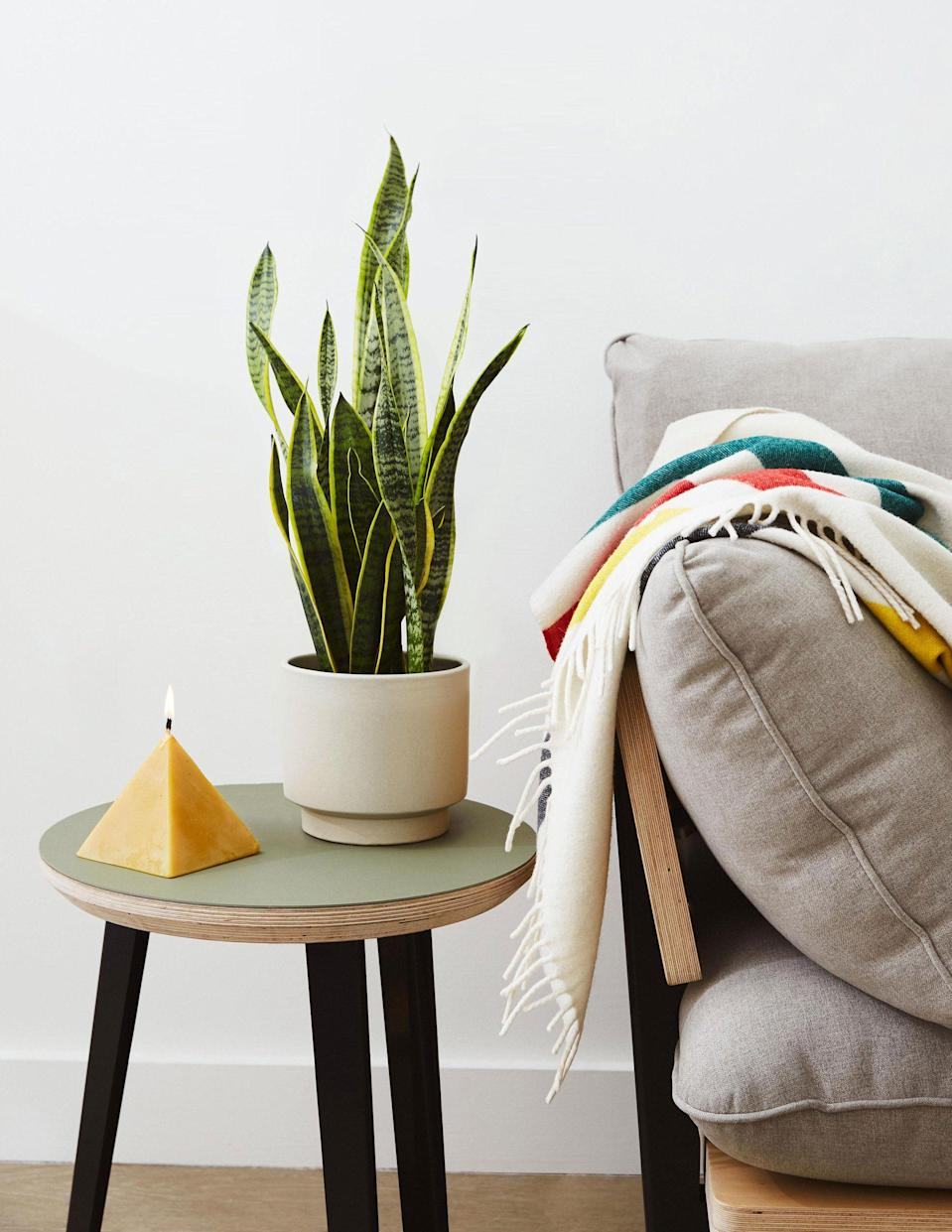 """<p>thesill.com</p><p><a href=""""https://go.redirectingat.com?id=74968X1596630&url=https%3A%2F%2Fwww.thesill.com%2Fproducts%2Flow-light-potted-plants-monthly-subscription-box&sref=https%3A%2F%2Fwww.redbookmag.com%2Flife%2Fg34730157%2Fbest-subscription-boxes%2F"""" rel=""""nofollow noopener"""" target=""""_blank"""" data-ylk=""""slk:Shop Now"""" class=""""link rapid-noclick-resp"""">Shop Now</a></p><p>Have a less-than-green thumb, and need semi-constant plant replacement? Or maybe just a desire to grow your indoor garden? The Sill's """"Low Light Plants"""" subscription is the answer. The hip New York plant shop sends one, low-light tolerant plant per month, hand-potted in an earthenware pot. (Yes, you get to choose the color of the pot.) For those with slightly greener thumbs, they also offer subscriptions for first-time plant owners, medium-sized plants, and pet-friendly plants. </p><p><em>$42 per month.</em> </p>"""