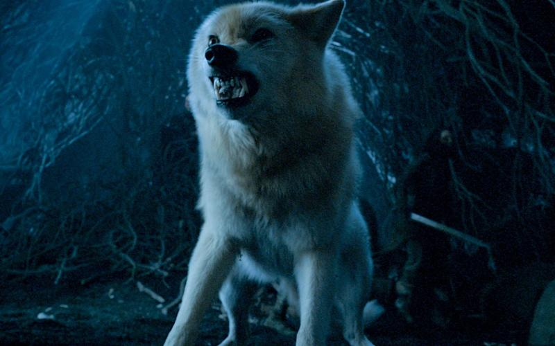 Direwolves: the understated stars of season eight - HBO