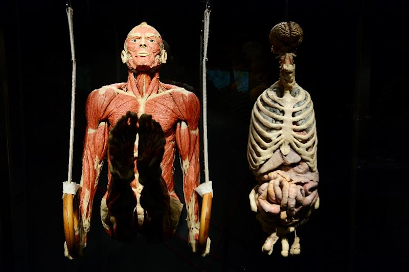 "A full body plastinate of a person training on gymnastic rings, pictured at Gunter von Hagens' ""Menschen Museum"" (Human Being Museum) in Berlin (AFP Photo/John MacDougall)"