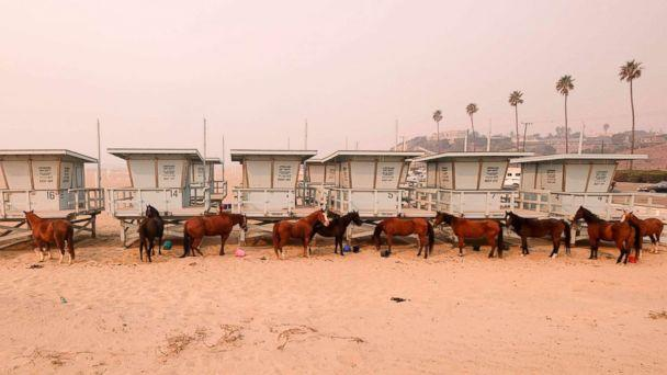 PHOTO: Horses are tied to lifeguard booths on the beach in Malibu, Calif., Nov. 10, 2018. Wildfires are burning in both Southern and Northern California. (Ringo H.W. Chiu/AP)
