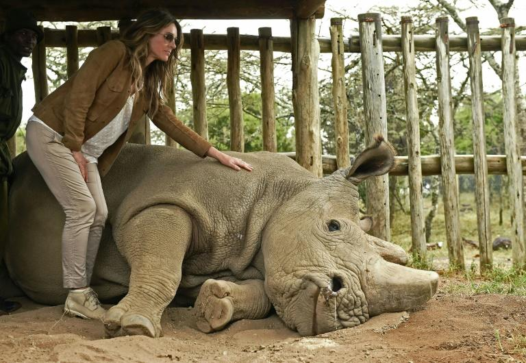 British actress Liz Hurley poses next to Sudan, the last male northern white rhino, which has died in Kenya at the age of 45