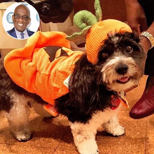 "<p>Aw! The <i>Today</i> co-host did a trial run of his pup in costume ahead of Halloween. ""My girl, Pepper, previewing her #halloween #costume,"" Roker shared. ""The only time I will approve of #pumpkin #spice."" (Photo: <a href=""https://www.instagram.com/p/BMC7t03jl0u/"" rel=""nofollow noopener"" target=""_blank"" data-ylk=""slk:Instagram"" class=""link rapid-noclick-resp"">Instagram</a>/Getty Images) </p>"