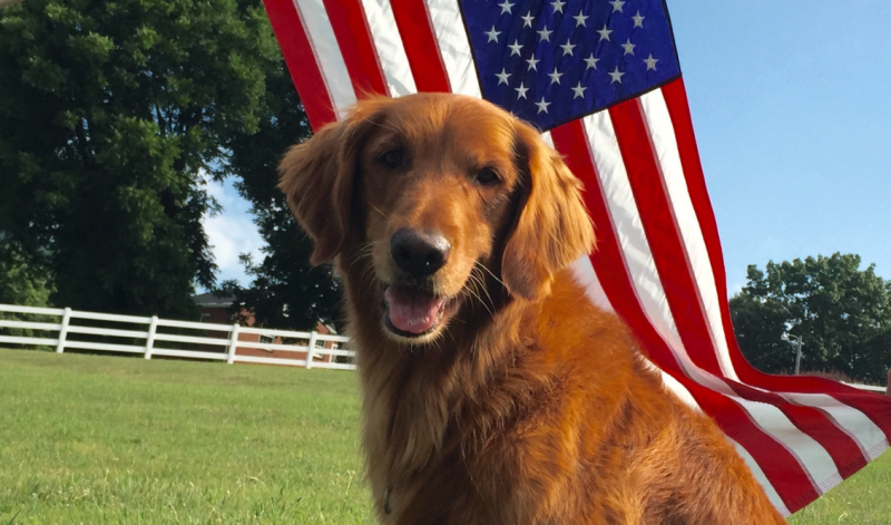 Bush's Beans dog, Duke, dies after battling cancer