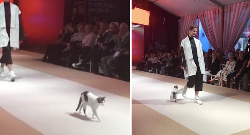 Random cat crashes fashion show, tries to scratch models on catwalk