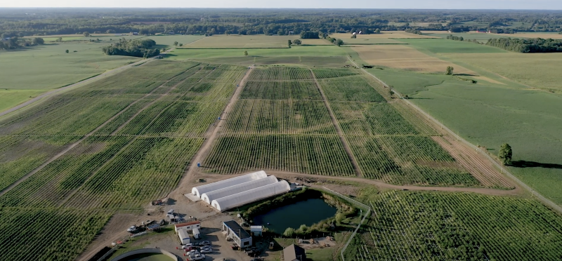 48North's outdoor cannabis farm is seen in a September 2019 promotional video. (48North/YouTube)