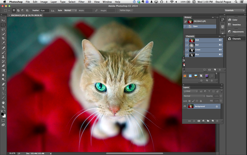 Photo of cat in Photoshop