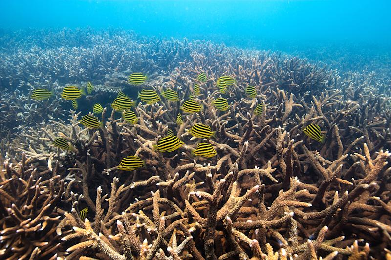 Coral off the Keppel Group of islands in the Southern Great Barrier Reef, in Feb. 2016. | Gary Farr —Greenpeace