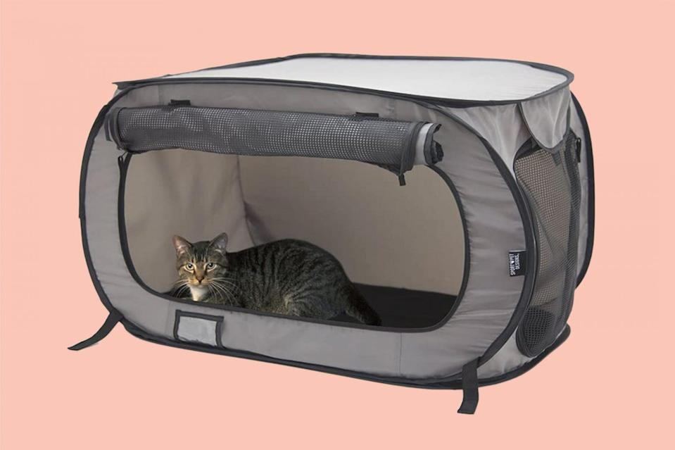 The Advantages of a Cat Kennel