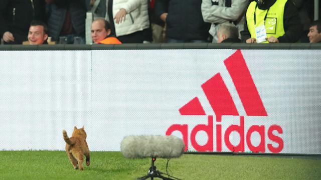 UEFA has fined Besiktas following a number of incidents during their Champions League clash with Bayern Munich, including a cat invader.