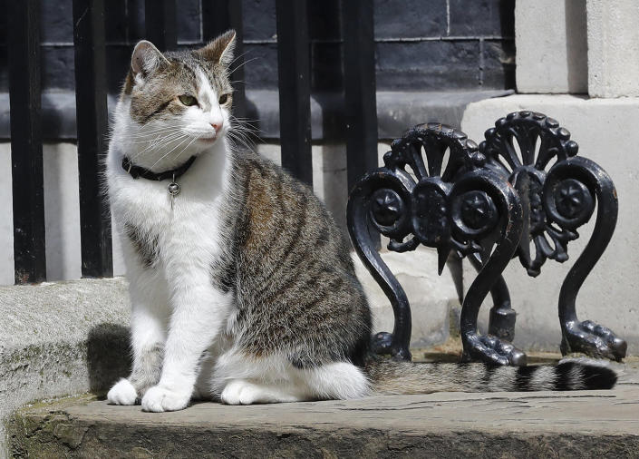 <p>Larry the Downing Street as he cat sits on the steps of 10 Downing Street in London, after Britain's Prime Minister David Cameron left to face prime minister's questions for the last time, July 13, 2016. (AP Photo/Frank Augstein) </p>