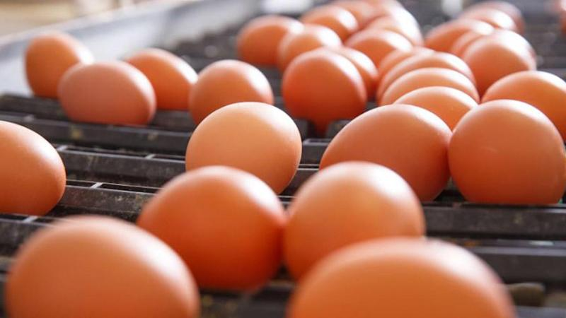 Egg Recall: North Carolina Farm Linked to Salmonella Scare Infested with Rodents and Filth: Report