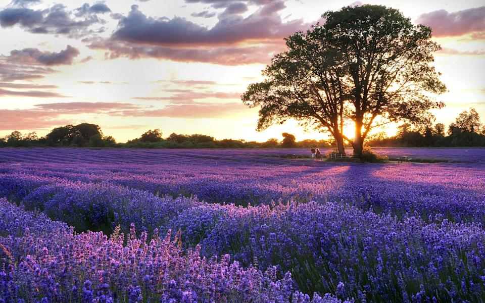 That's not Provence - Getty