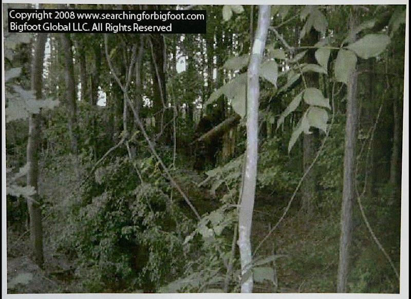 This still-frame image from video provided by Bigfoot Global LLC shows what is claimed by them to be a Bigfoot or Sasquatch creature in an undisclosed area of a northern Georgia forest in June 2008.