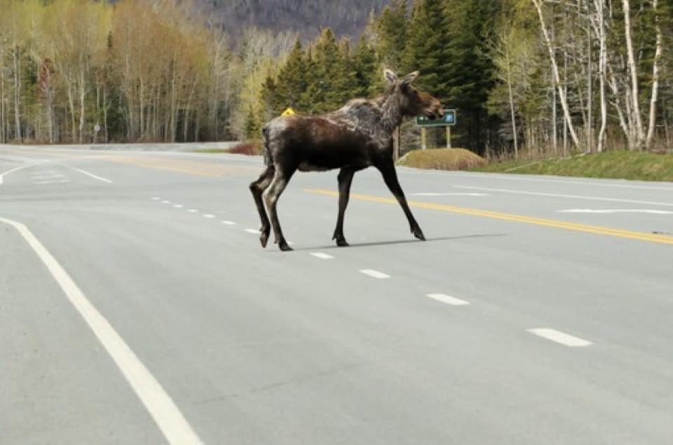 Wildlife collisions can increase in the fall, here's how to avoid them