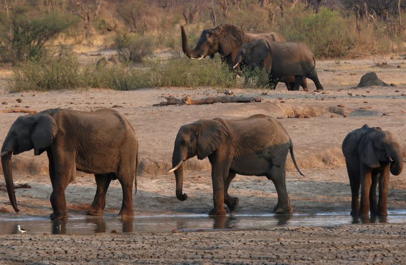 Zimbabwe finds more elephant carcasses, death toll at 22
