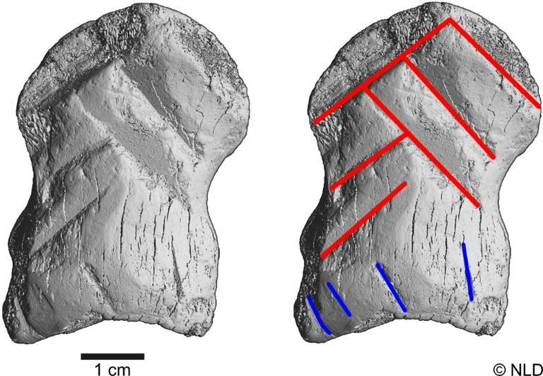Archaeologists determined the artifact to be at least 51,000 years old -- before the arrival of Homo Sapiens in central Europe