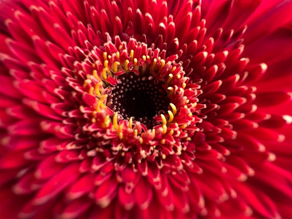The iPhone 13 Pro now lets you take macro photos, allowing you to focus on a subject as close as 2cm. (Image: Apple)