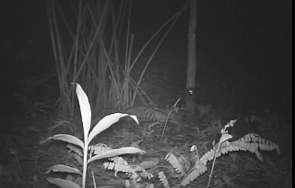 Endangered Tiger Cubs Caught on Camera Near Proposed Dam