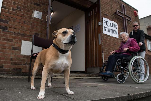 <p>Chanel, a Staffordshire Bull Terrier, is tied up outside a polling station at Tulse Hill Methodist Church as a woman in a wheelchair is escorted away on June 8, 2017 in London, United Kingdom. (Photo: Chris J Ratcliffe/Getty Images) </p>