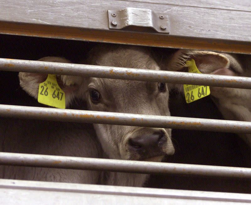 Mad cow fright keeps EU cautious on food rules
