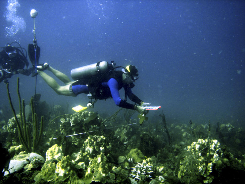 """FILE - In this Dec. 2005 file photo provided by the National Park Service shows National Park Service fisheries biologist Jeff Miller examining the coral reef in the Buck Island Reef National Monument in St. Croix, Virgin Islands, after bleaching from record hot water followed by disease has killed ancient and delicate Caribbean coral.According to coral experts like Roberto Iglesias the so-far elusive goal of world climate talks at the UN Climate Change Conference in Cancun, Mexico, limiting global warming to 2 degrees C (3.6 F), is too little too late. Coral reefs, which are like underwater jungles that host 25 percent of marine species, have been weakened by water pollution and overfishing, leaving them vulnerable to a warming ocean that """"bleaches"""" and kills corals. (AP Photo/U.S. Geological Survey, Caroline Rogers, File)"""