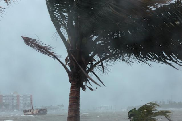 <p>A palm tree buckles under winds and rain as Hurricane Irma slammed across islands in the northern Caribbean on Wednesday, in Fajardo, Puerto Rico, Sept. 6, 2017. (Photo: Alvin Baez/Reuters) </p>