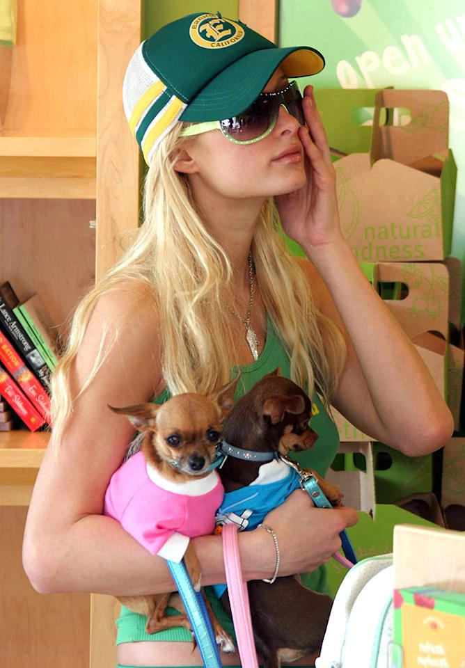 """Paris Hilton's chihuahua's are well-accessorized! Gros-Madison/<a href=""""http://www.x17online.com"""" target=""""new"""">X17 Online</a> - May 28, 2005"""
