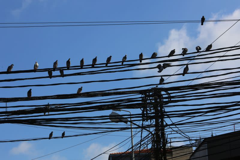 Birds sit on electricity cables in Tyre