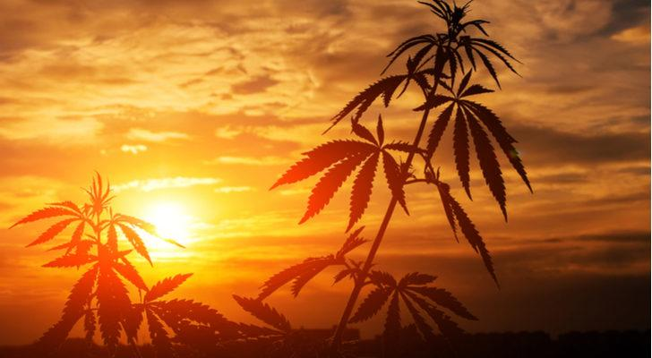 Profit from Cannabis with Canopy Growth (CGC) and Scotts Miracle-Gro (SMG)