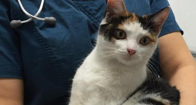 The 'friendly' cat was found in the man's car engine when he parked outside a block of flats in east London. (Celia Hammond Animal Trust)