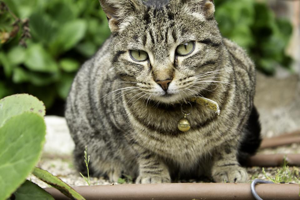 Stray cat with rattle, animals and nature