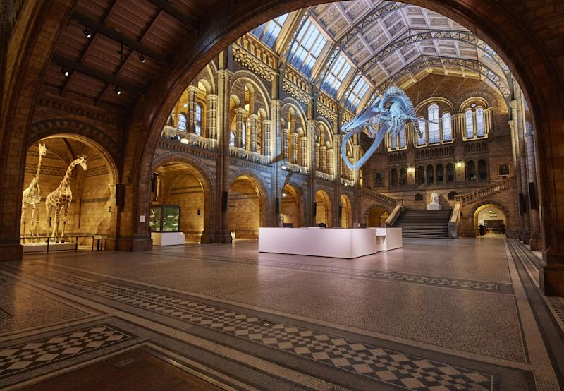 Clash: The Natural History Museum insisted it had the stronger arsenal for a battle in its vast collection: PA