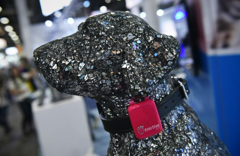 A Tractive GPS pet tracker is seen on a dog mannequin during CES 2018 in Las Vegas