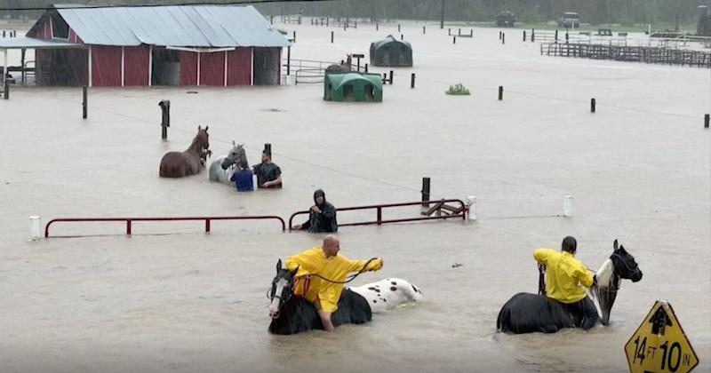 Volunteers Successfully Rescue Over 50 Horses Stuck in Chest-Deep Texas Floodwaters