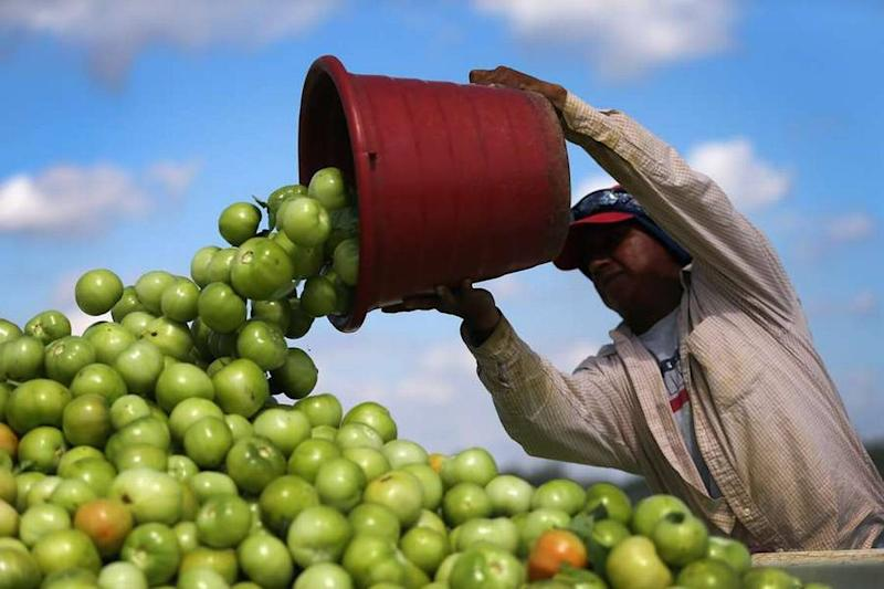 Trump administration announces plans to help Florida growers hurt by Mexican trade